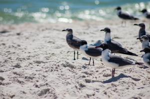 Jax Beach Memorial Day